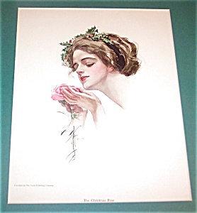 Antique Edwardian Lady Print Pink Rose Harrison Fisher