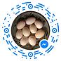 Doug's Ducks Eggs