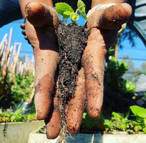Quality Seedlings