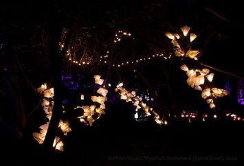 Kathryn Wadel_Mycelium Movement (Spore D