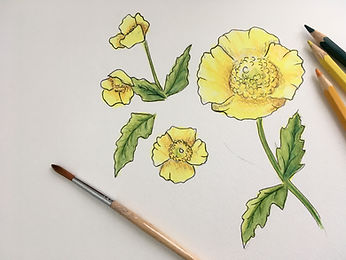 Botanical Inspired Watercolour Painting.