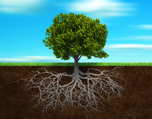 Healing The Root Cause