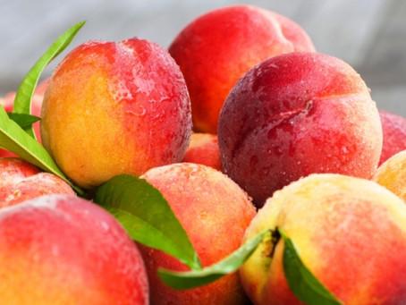 В Вулканештском районе приступили к уборке сливы и персика