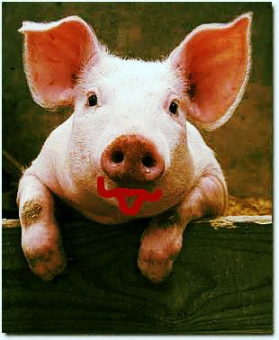 pig image_edited.jpg