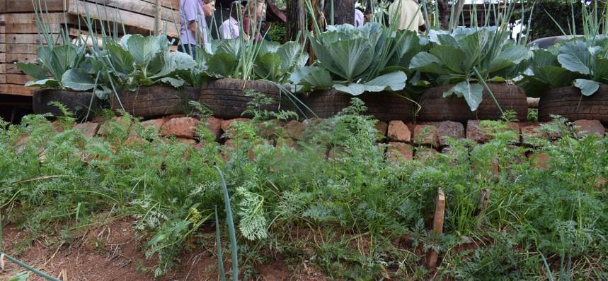Vegetable established using organic meth