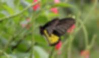 sammilan-shettys-butterfly-park-belvai1.