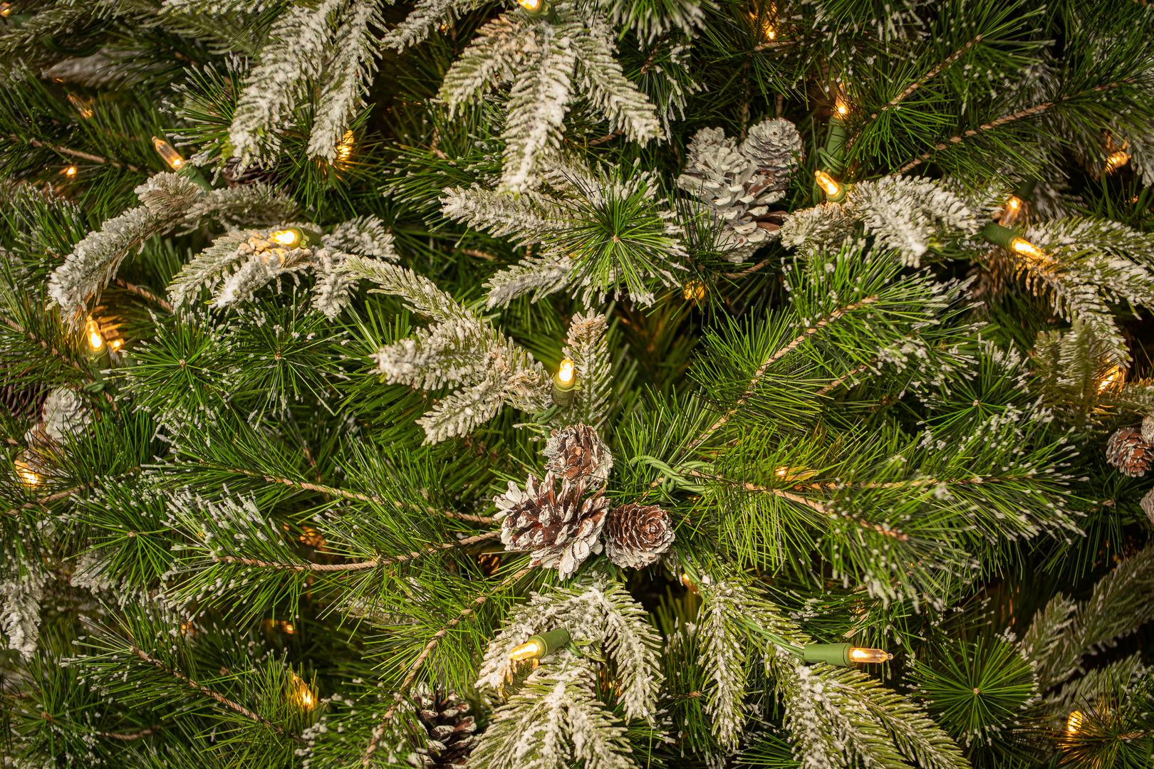 Liberty Pine 1.tif