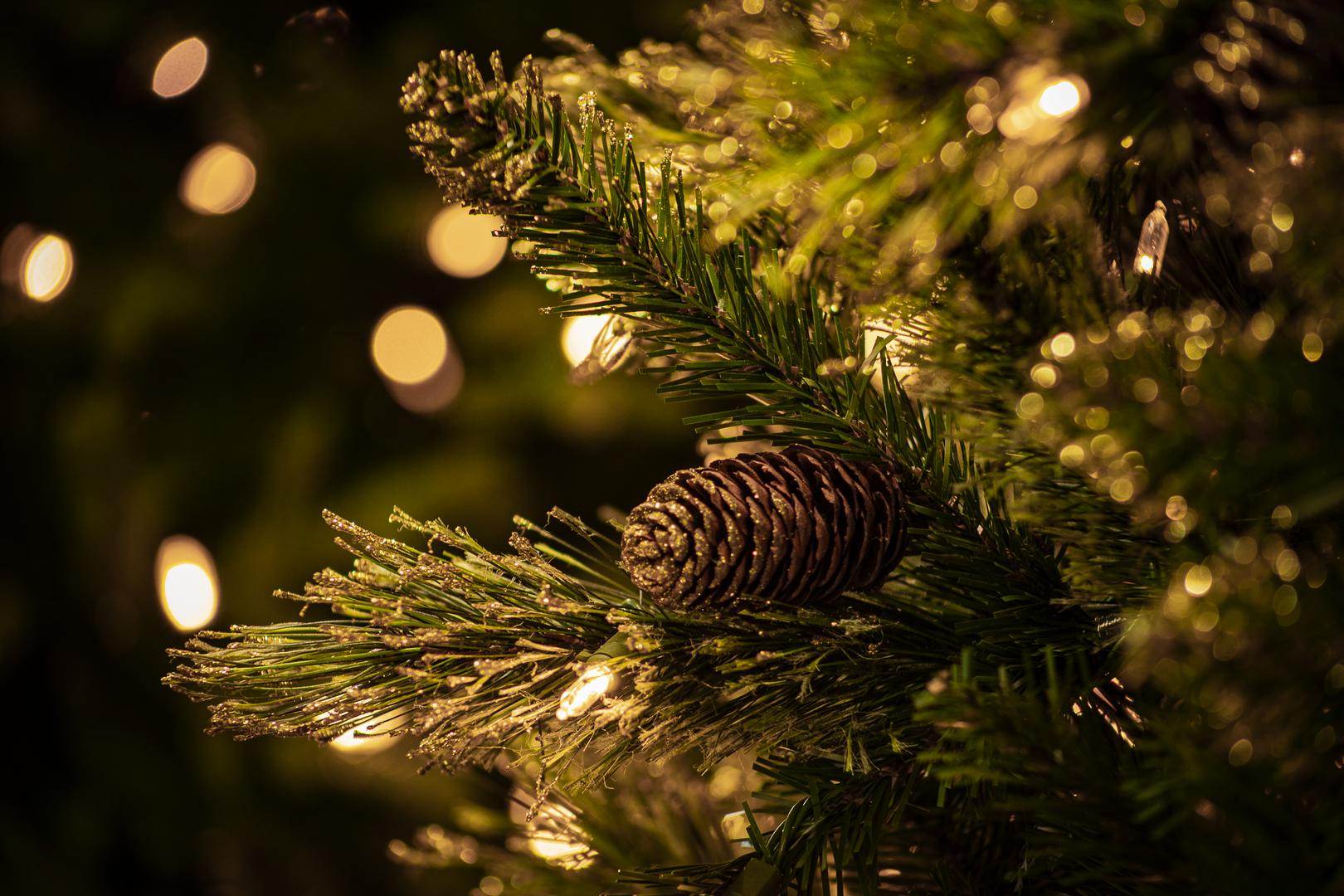 Shimmery Golden Bristle Pine 2.tif