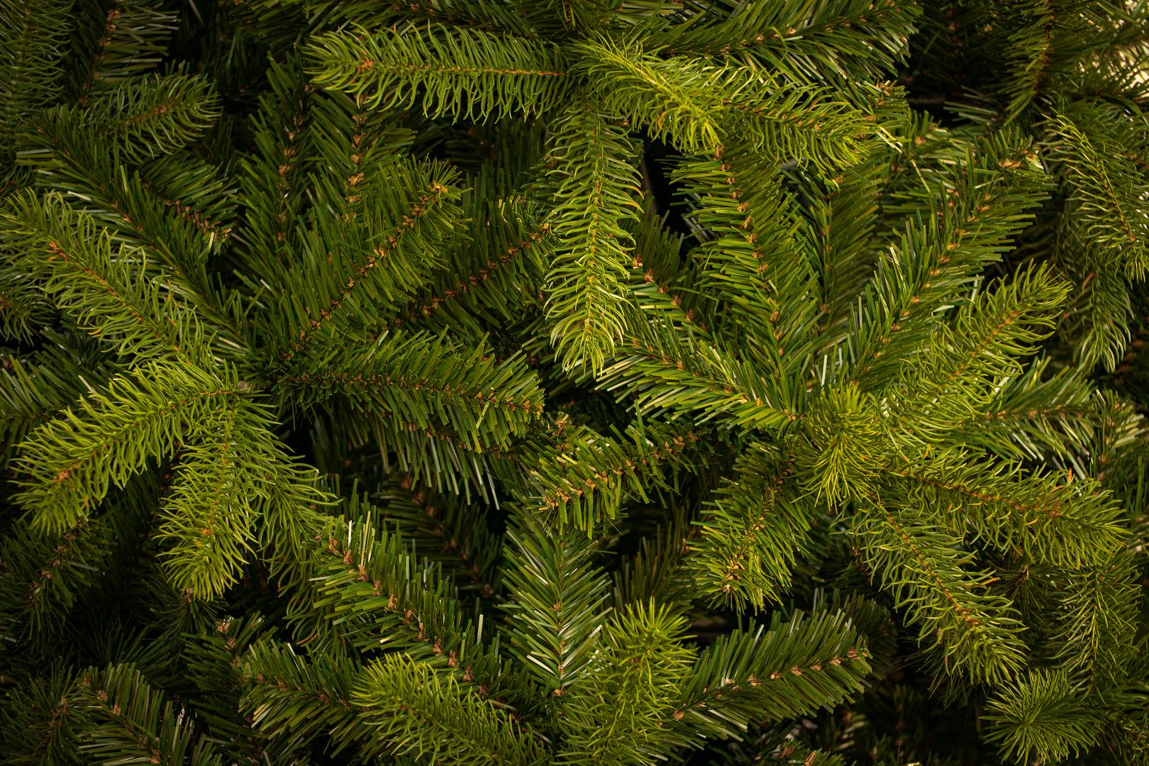 Newberry Douglas Fir Tree 1.tif
