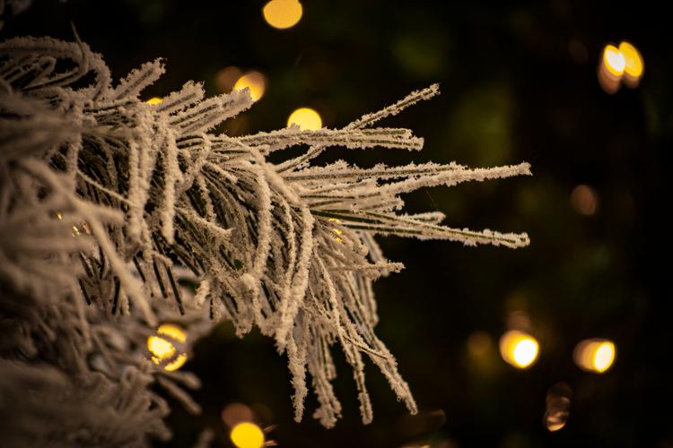 Snowy Crest Spruce 2.tif