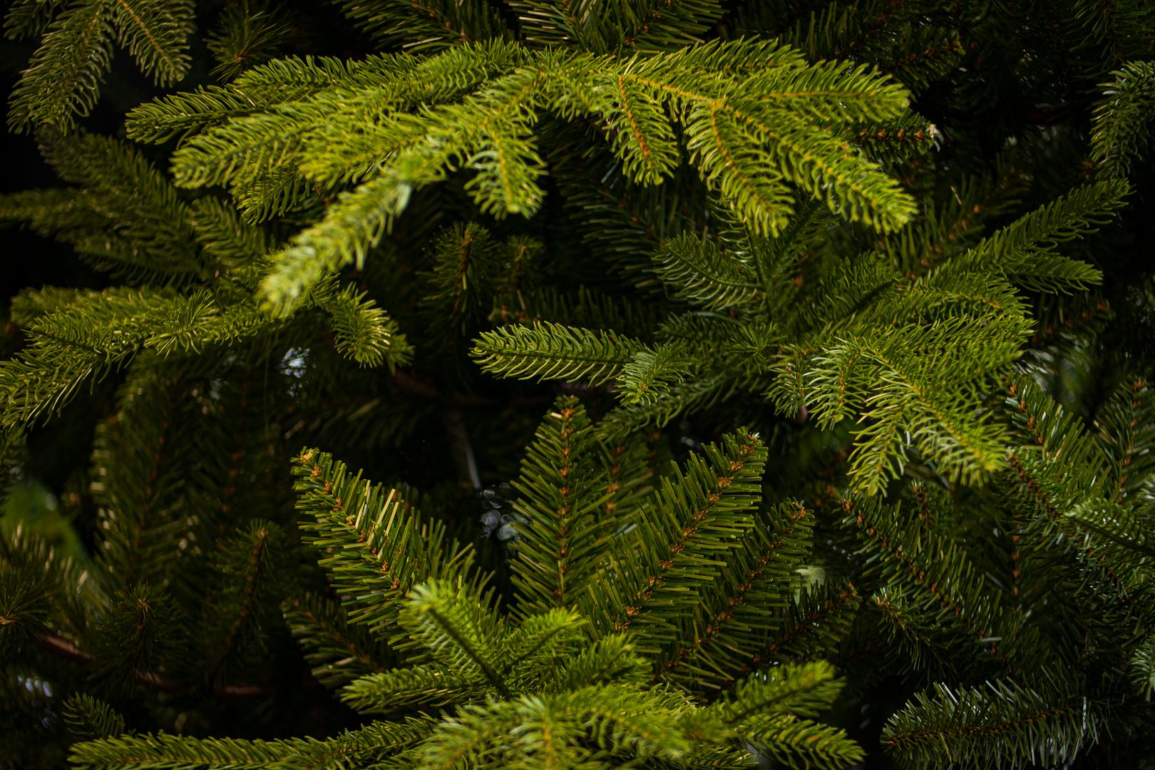 Milford Spruce 1.tif