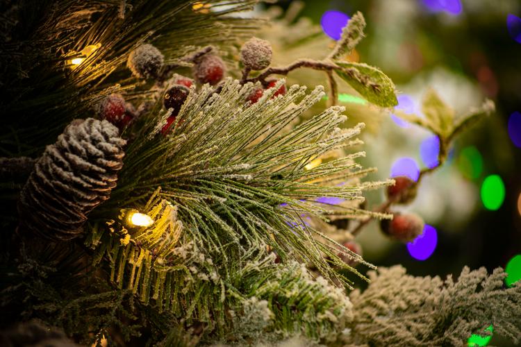 Snowy Bedford Pine 2.tif