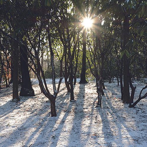 Woodland Sun & Shadows