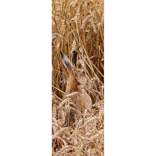 Hare in a Wheat field
