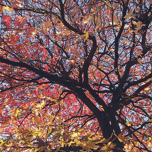 Sunlight Canopy