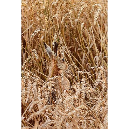 Hare in a Wheat field Jigsaw