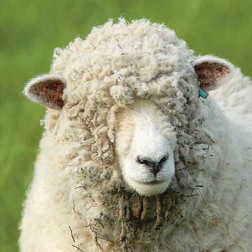 I can see Ewe! - Ryland Ewe