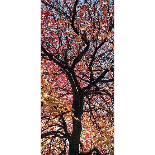Sunlight Canopy (Harrogate Valley Gardens)