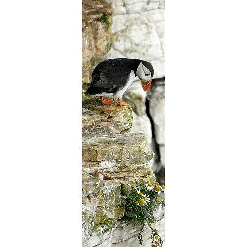 Puffin I - Bempton Cliffs