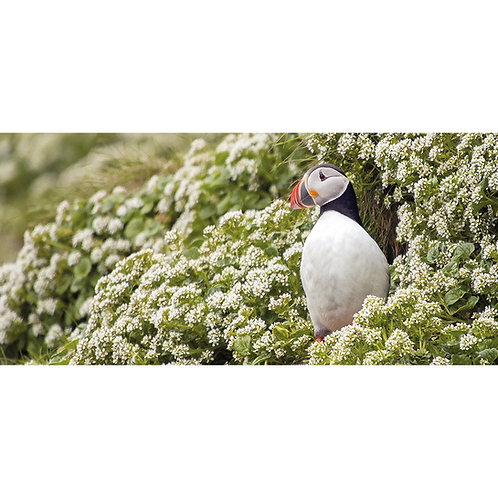 Puffin in a sea of flowers