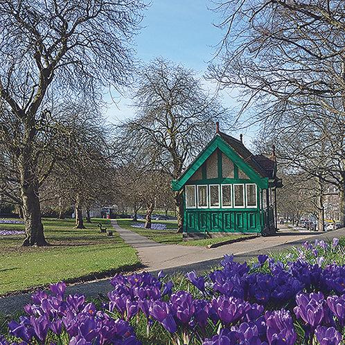 Bathchair hut and Crocus - Harrogate