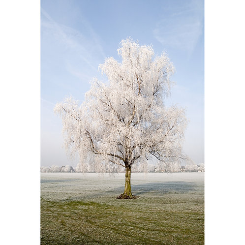 Rime Frost Tree  (Canvas)