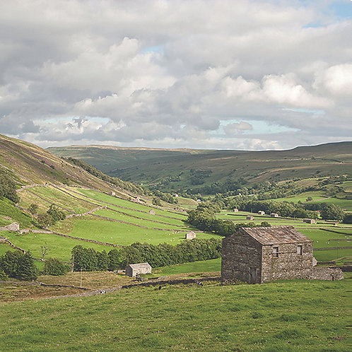 Upper Swaledale - Cow Barns
