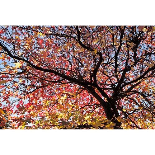 Sunlight Canopy (Canvas)