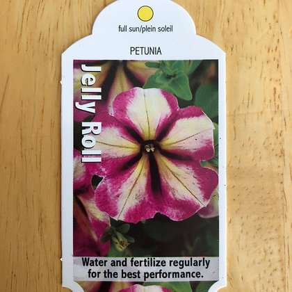 Petunia - Jelly Roll : 4 inch pot