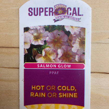 SuperCal - Salmon Glow : 4 inch pot