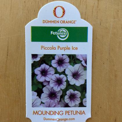 Mounding Petunia - Piccola Purple Ice : 4 inch pot