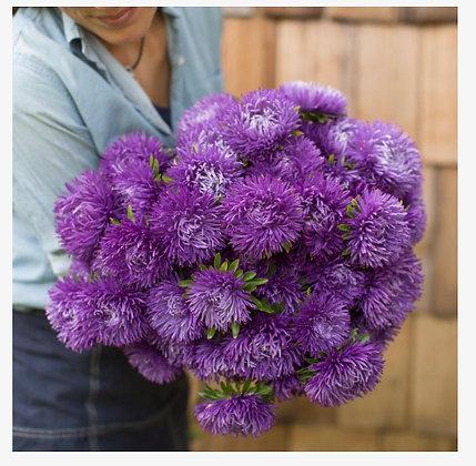 China Aster Royal Purple Mix