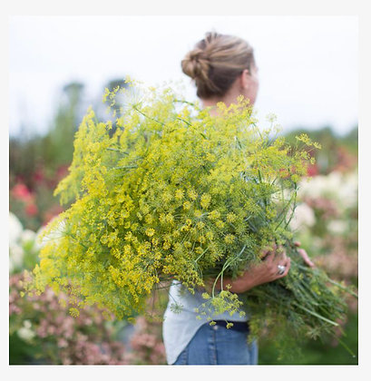 Dill Bouquet : 4 pack