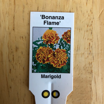 Marigold - 'Bonanza Flame' : 4 pack