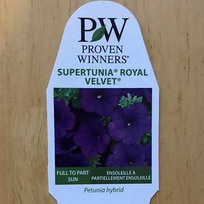 Petunia Hybrid - Supertunia Royal Velvet : 4 inch pot