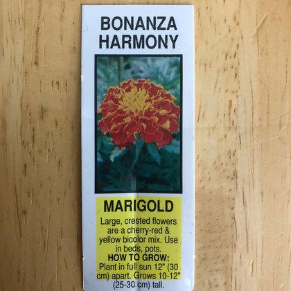 Marigold - Bonanza Harmony : 4 pack