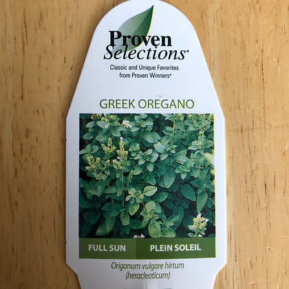 Greek Oregano : 4 inch pot