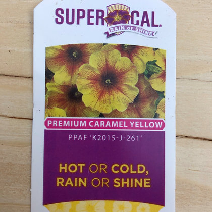SuperCal - Premium Caramel Yellow : 4 inch pot