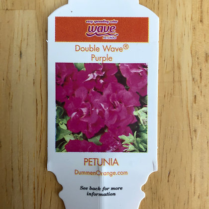 Petunia - Double Wave Purple : 4 inch pot