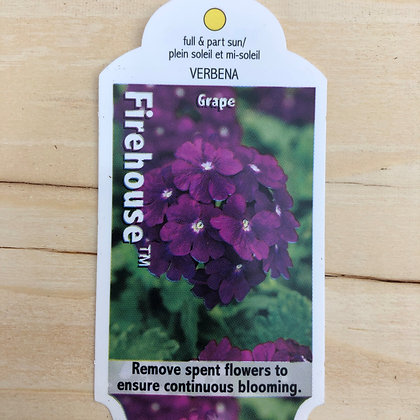 Verbena - Firehouse Grape : 4 inch pot