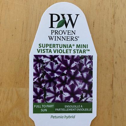 Petunia Hybrid - Supertunia Mini Vista Violet Star : 4 inch pot