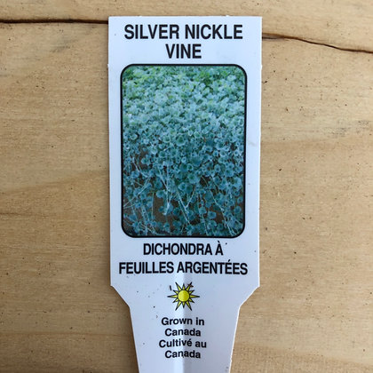 Silver Nickle Vine : 3 inch pot