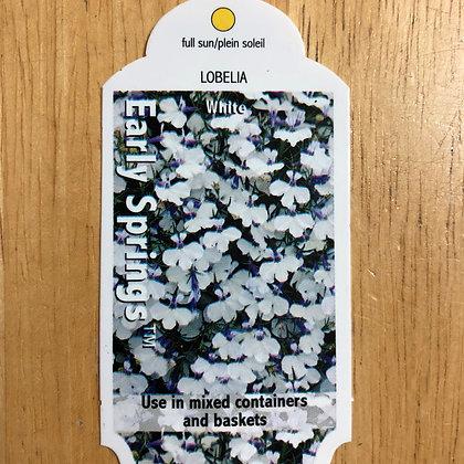 Lobelia - Early Springs White