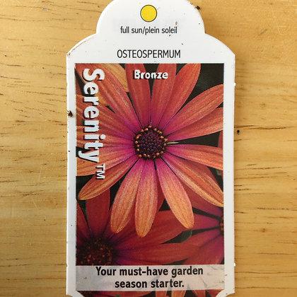 Osteospermum - Serenity Bronze : 4 inch pot