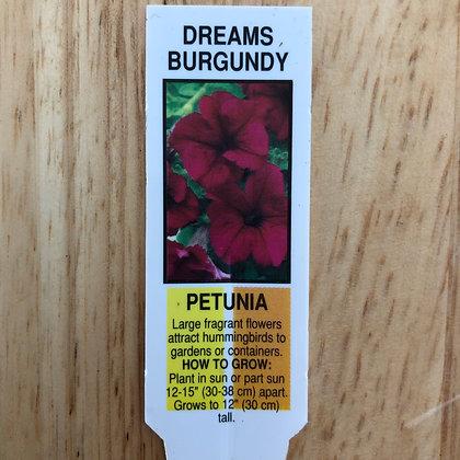 Petunia - Dreams Burgundy : 4 pack