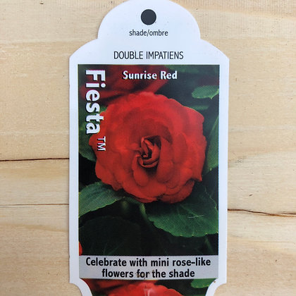 Double Impatiens - Fiesta Sunrise Red : 4 inch pot