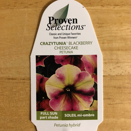 Petunia Hybrid - Crazytunia Blackberry CheeseCake : 4 inch pot