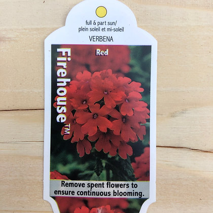 Verbena - Firehouse Red : 4 inch pot