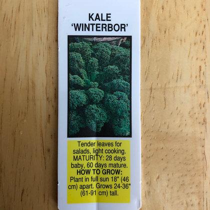 Kale : 4 pack