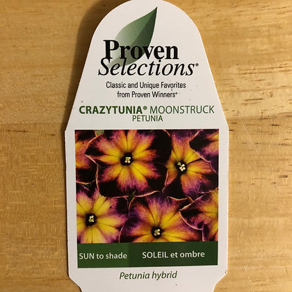 Petunia Hybrid- Crazytunia Moonstruck : 4 inh pot
